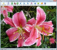 Free Photo Slide Show is a program designed to display all digital photos and graphic files as a slide show using many transition effects, each image being shown for some predetermined time before going on to the next.